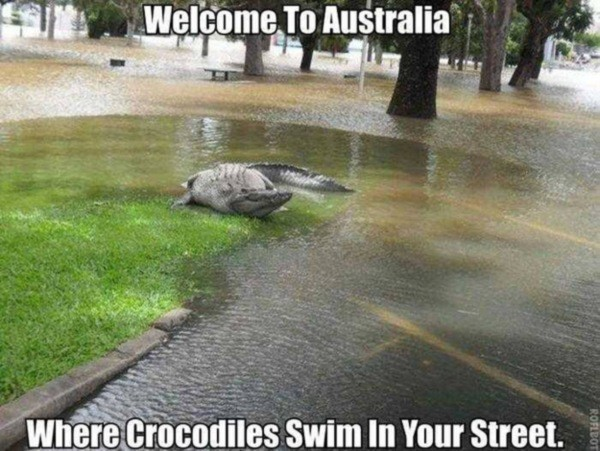 14. Добро пожаловать в Австралию, где крокодилы плавают по твоей улице австралия, животное, опасность