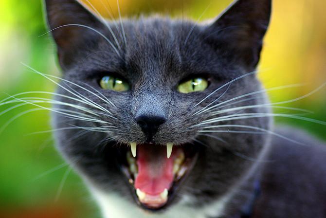 крючком сонник яркий кот рычит капли Ирифрин инструкция
