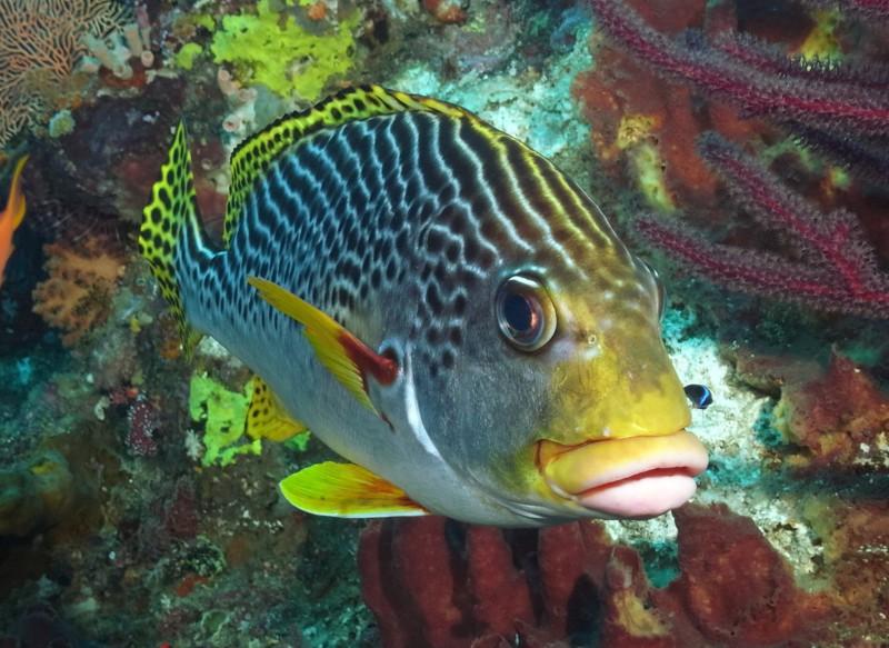 рыбок губками фото с