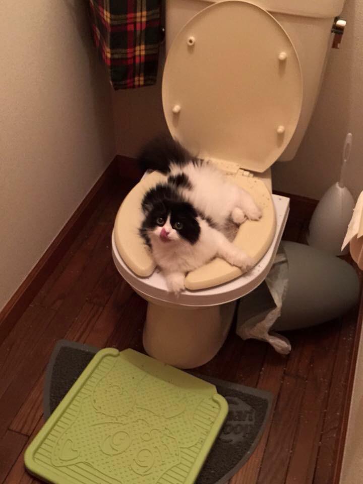 Чемоданы, прикольные картинки с туалета