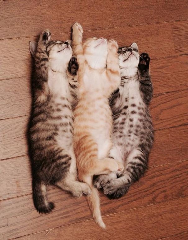 How often do kittens sleep