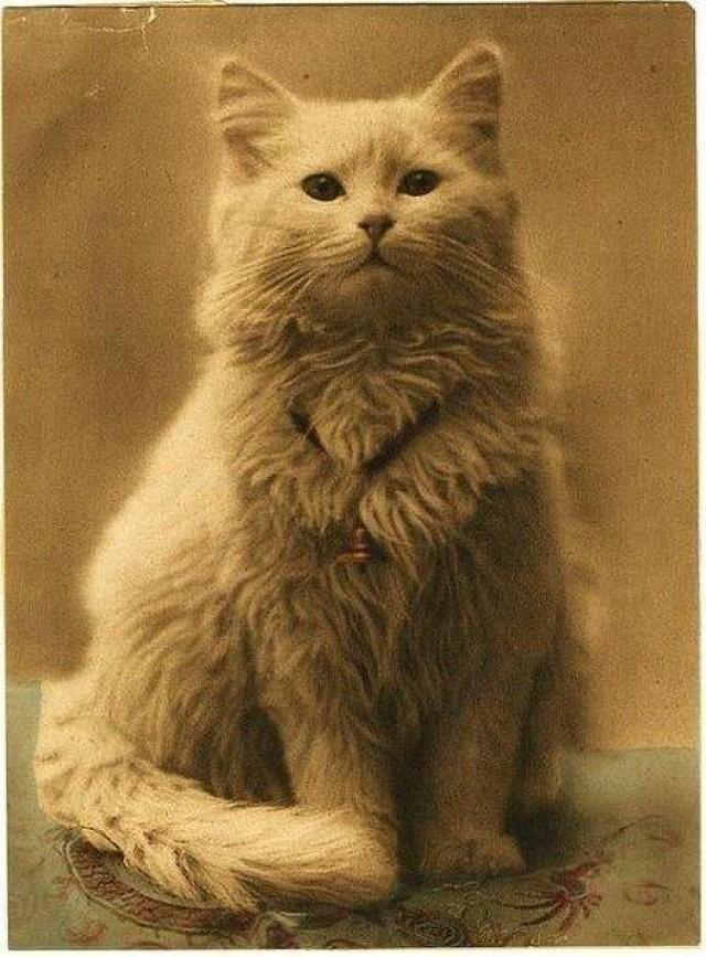 3. Одна из первых в мире фотографий котов (1880-1890). интересное, удивительные фотографии, фото