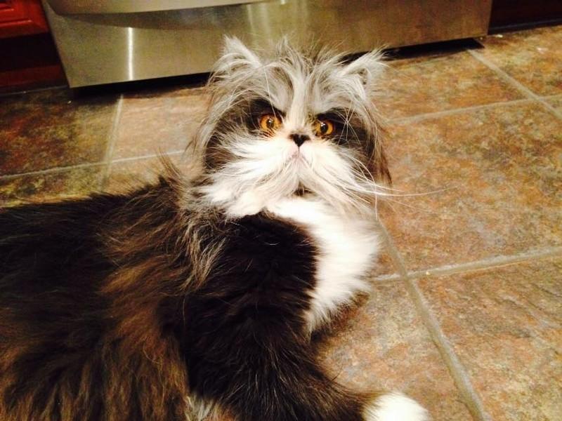 24. Кот, который выглядит, как безумный учёный. интересное, удивительные фотографии, фото