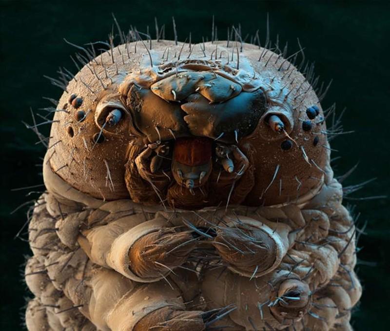 2. Гусеница под микроскопом. интересное, удивительные фотографии, фото