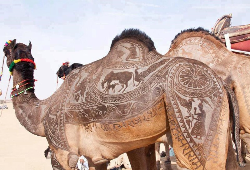 18. Стрижка верблюда. интересное, удивительные фотографии, фото