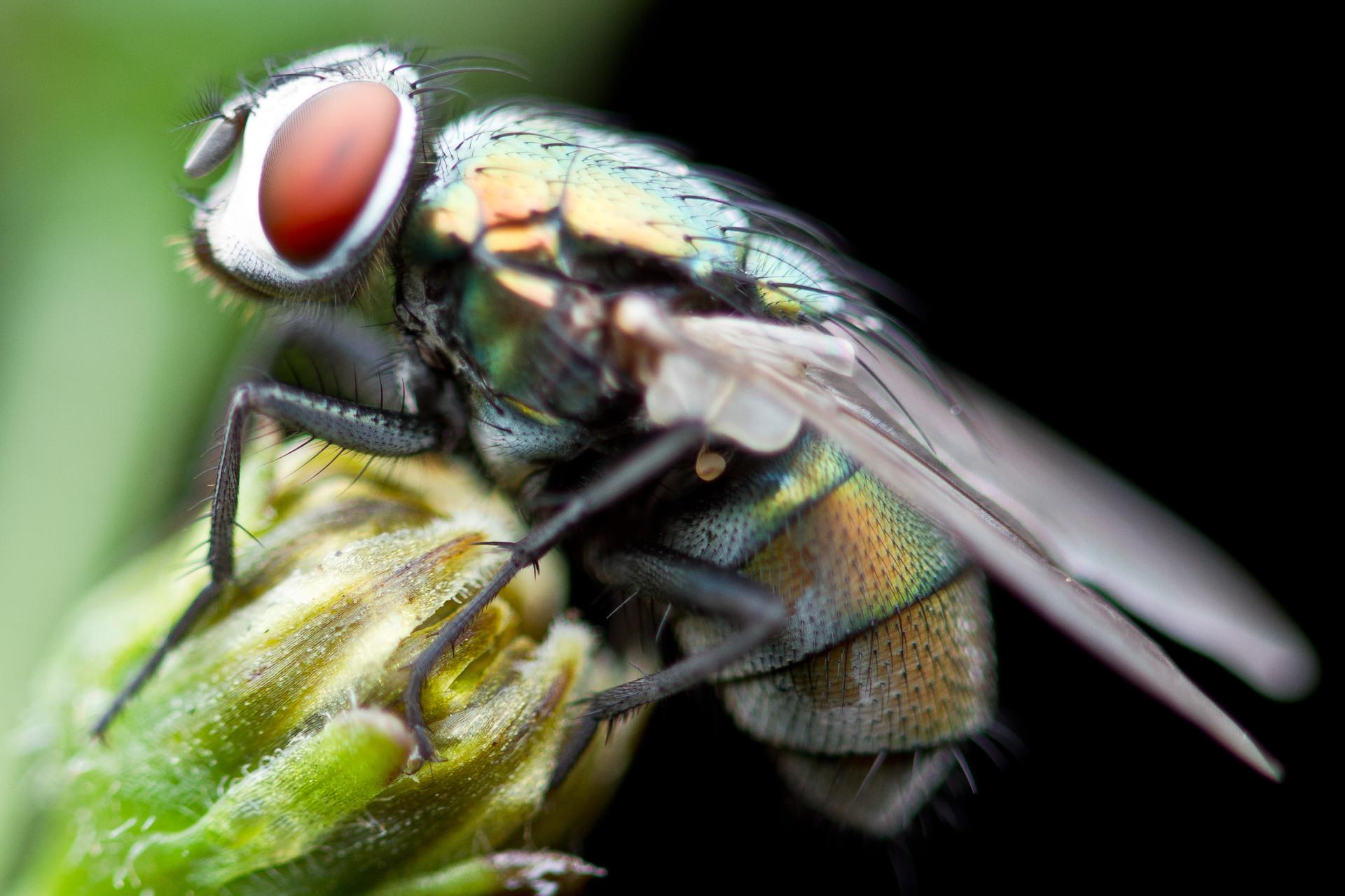 найти покажи картинки мухи любители-цветоводы