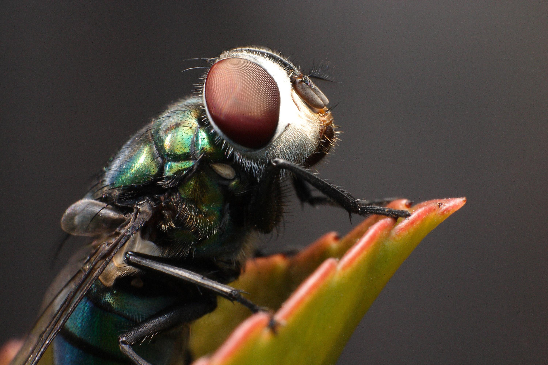 Картинки муха