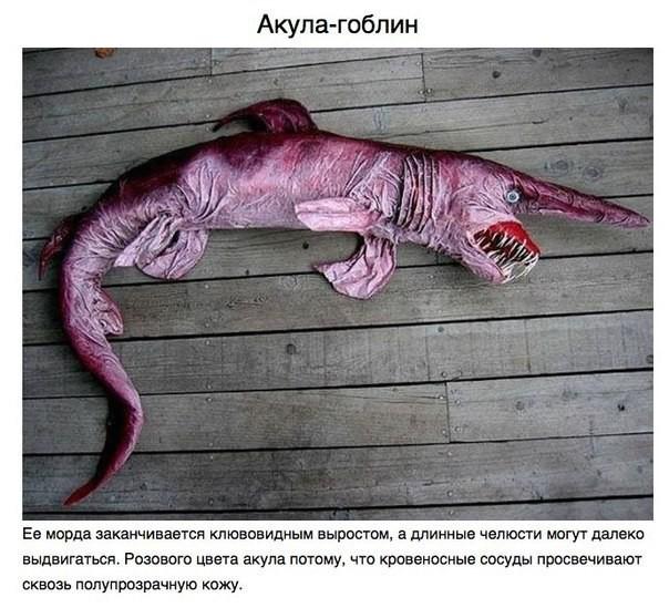 10 животных о существовании которых вы и не догадывались животные, наука, необычные животные мира, факты