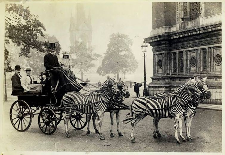 Самый экзотичный лондонский экипаж, 1894 год знаменитости, история, редкие кадры, фото