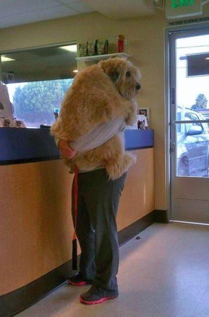 Картинки по запросу Собаки, которые едут к ветеринару