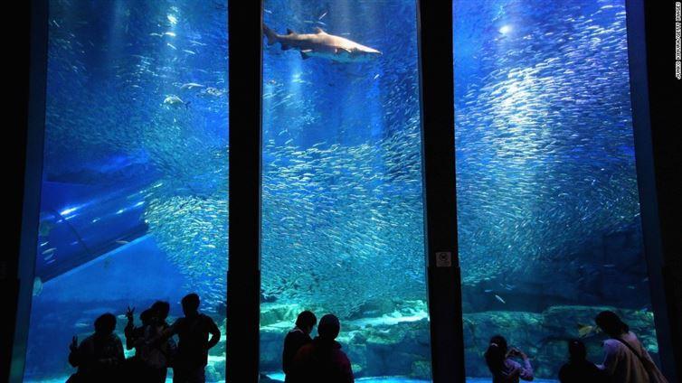 6. Йокогама Хаккейдзима Морской Рай лунапарк, места, парк аттракционов