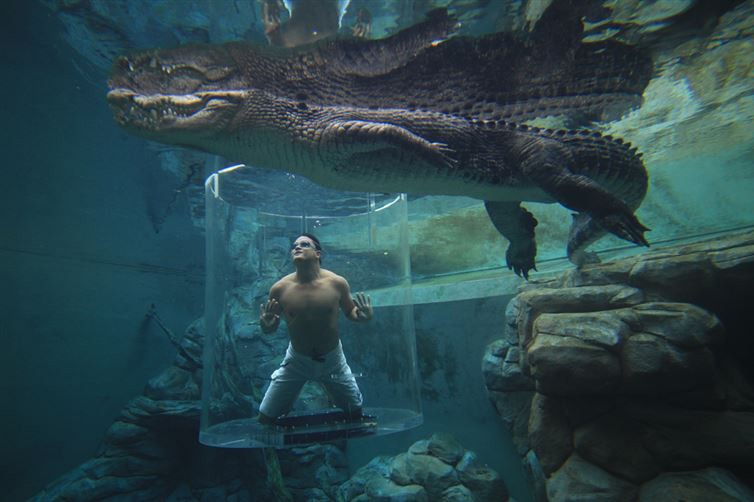 2. Бухта Крокозаурус лунапарк, места, парк аттракционов