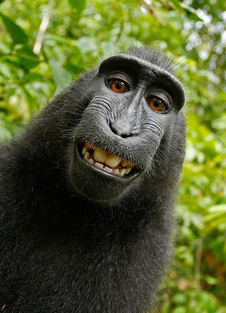 фото обезьяна смешное