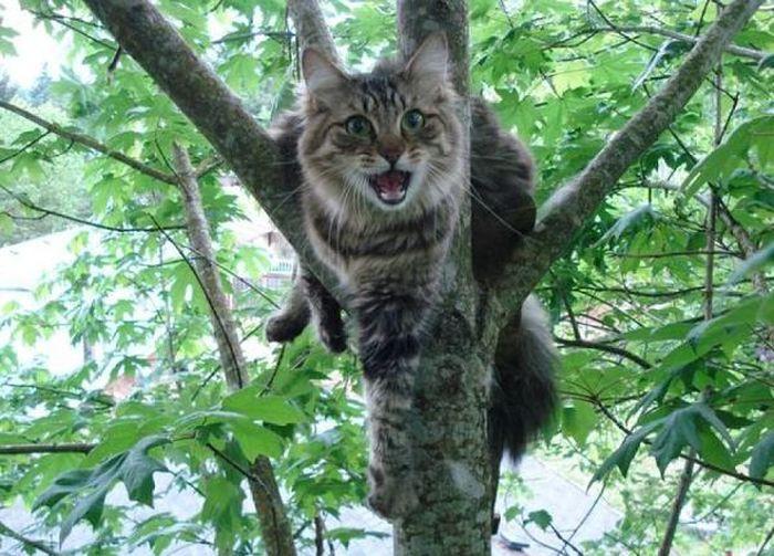 Картинки по запросу Кот залез на дерево