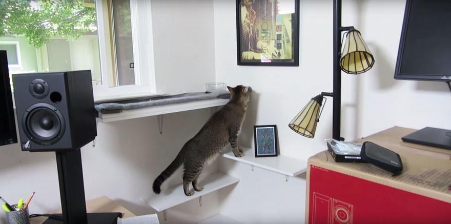 Кормушка, которая заставит кота поохотиться