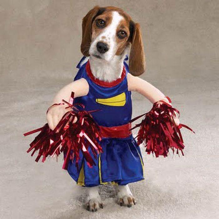 funny dog costumes - 600×600