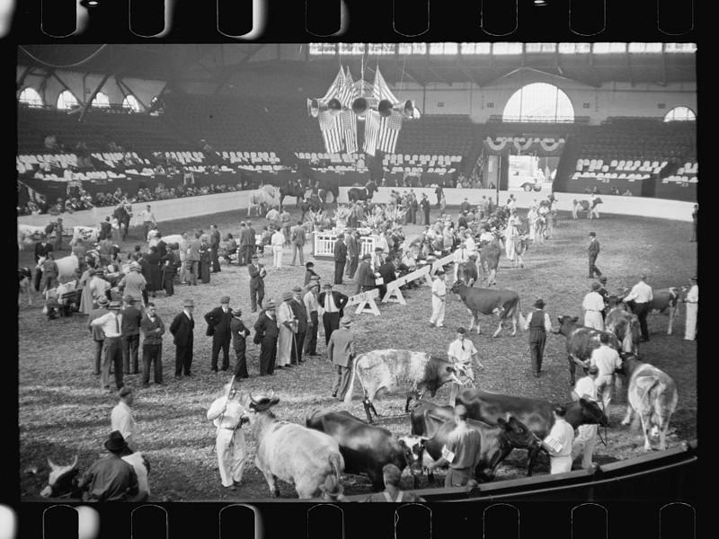 13. Ярмарка крупного рогатого скота. Спрингфилд, штат Массачусетс. Сентябрь 1936 года. америка, великая депрессия, кризис