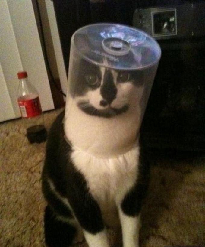Я просто хотел записать для тебя музыку на диск животные, кот, любопытство