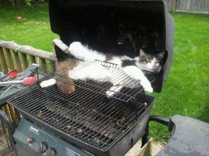 Раз уж я здесь застрял, то с чистой совестью можно и вздремнуть животные, кот, любопытство