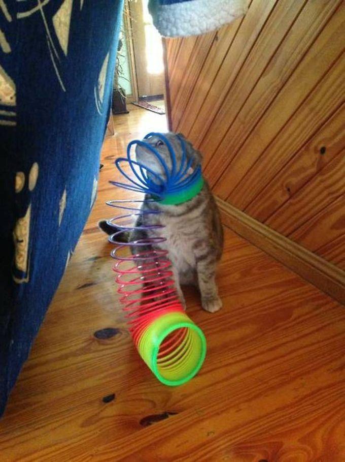 Снова пойман спиралью несправедливости животные, кот, любопытство