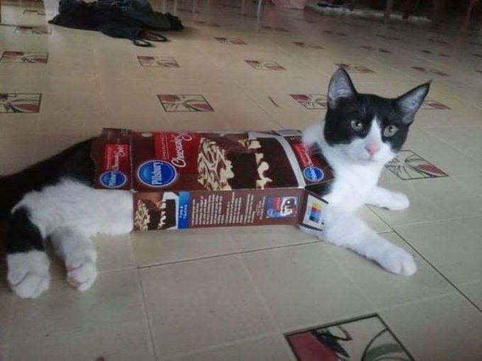 Вот что бывает, когда ты ешь до того, как накормишь меня животные, кот, любопытство