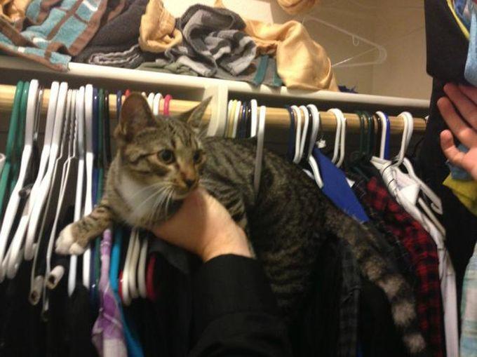 Это самый худший курс по лазанью в шкафу животные, кот, любопытство