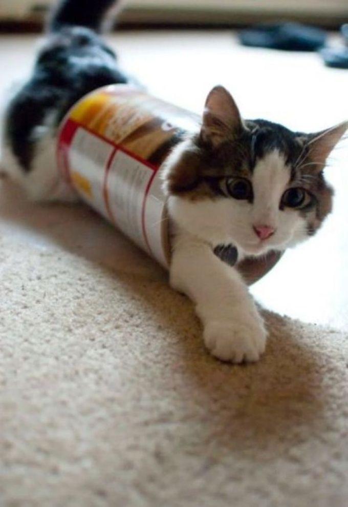 Зная, сколько усилий тебе понадобилось для того, чтобы достать чипсы из этой коробки, я уверен что застрял здесь надолго… животные, кот, любопытство