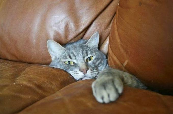 Да уж… Теперь я понимаю, почему мне не разрешают залазить на диван животные, кот, любопытство