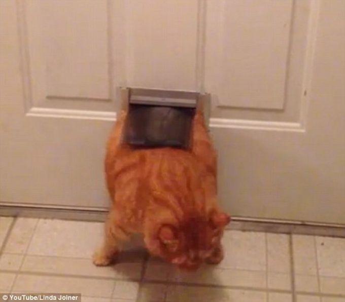 Это что, вход для мышей??? животные, кот, любопытство