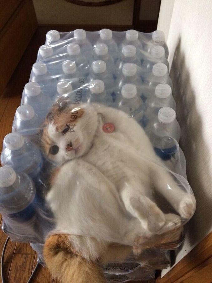 Если бы ты поил меня очищенной водой вместо гадости из-под крана, мне не пришлось бы так изворачиваться животные, кот, любопытство