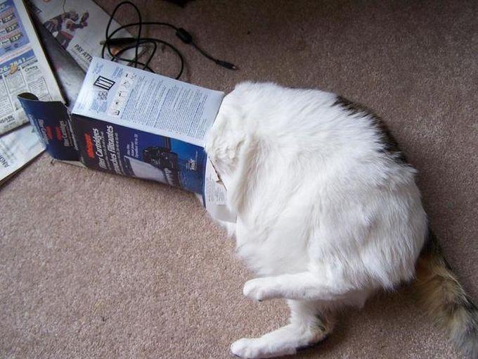 Не смейся. Помоги лучше эту штуку снять животные, кот, любопытство