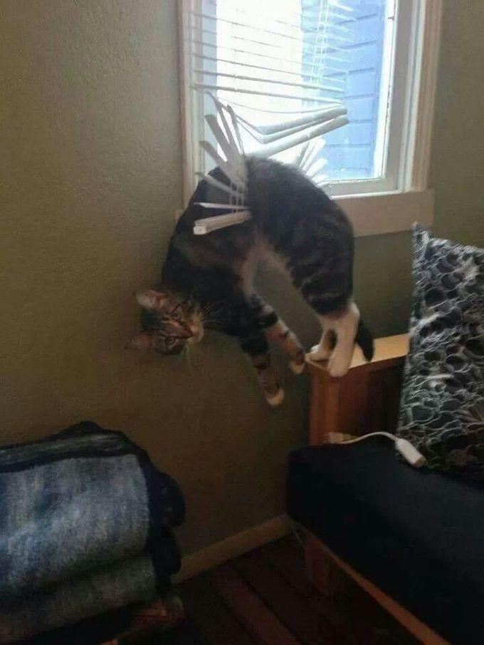 Т-сссс. Пожалуйста, помоги слезть, пока белка меня не увидела животные, кот, любопытство