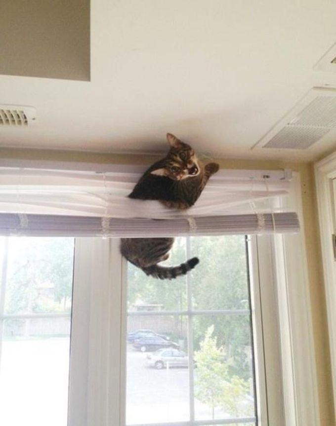 Надо было учиться на чужих ошибках… животные, кот, любопытство