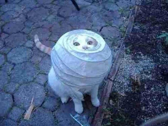Я увидел светильник, но он оказался не такой удобный, как я подумал животные, кот, любопытство