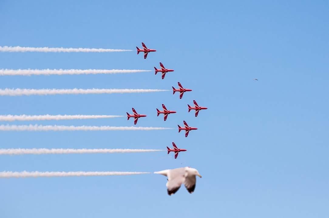 Красные стрелы — пилотажная группа Королевских ВВС Великобритании и....чайка кадр, мгновенье, фото