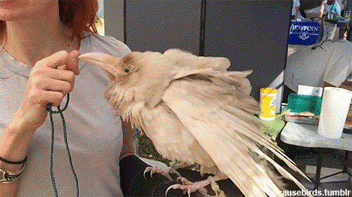 альбинос, животное
