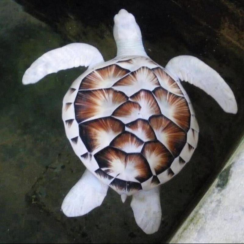 14. Морская черепаха альбинос, животное