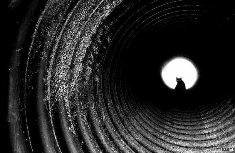 Зверь в конце тоннеля