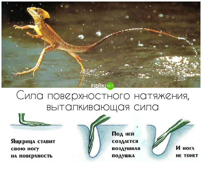 Физика в живой природе доклад 2185