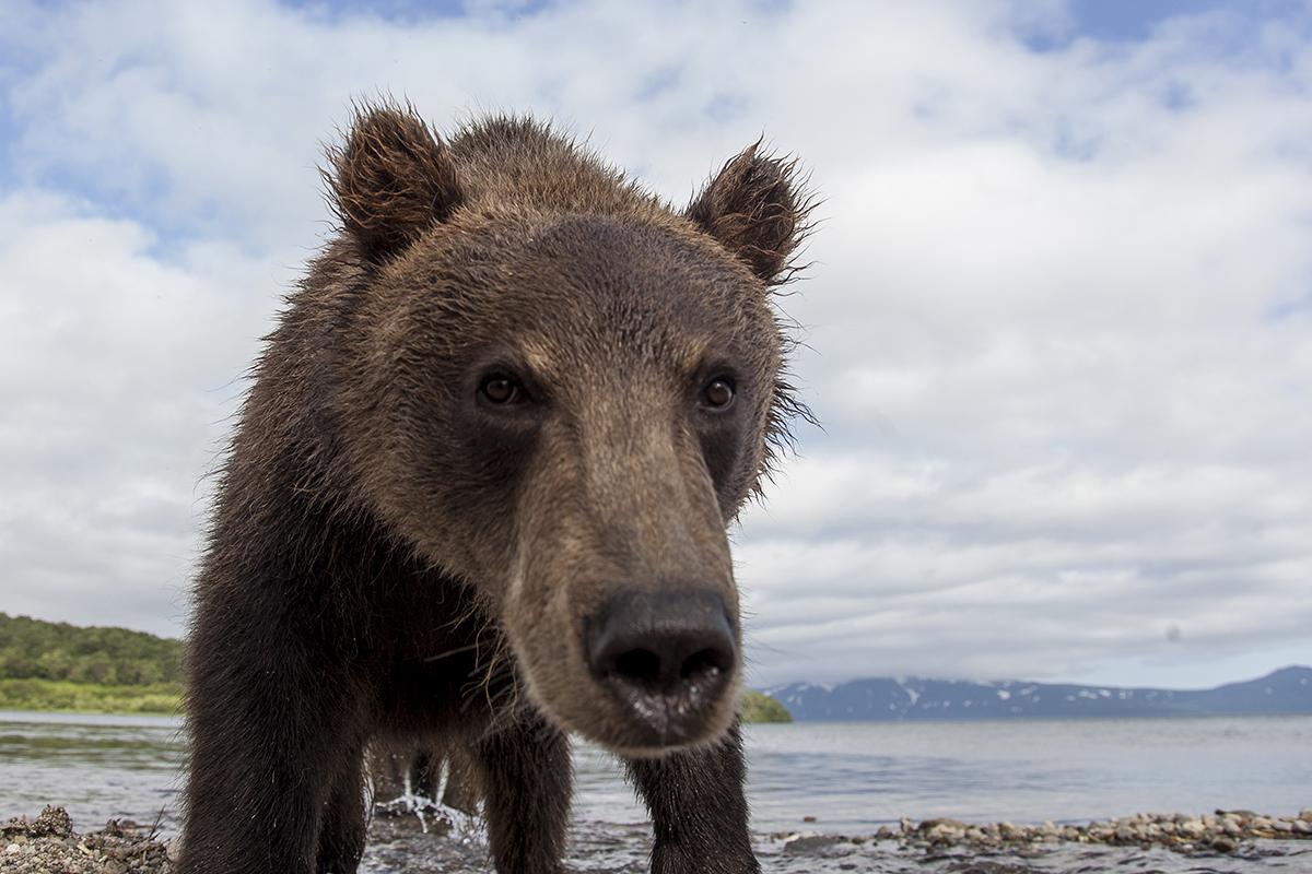 Медведь танцует сексв улан удэ