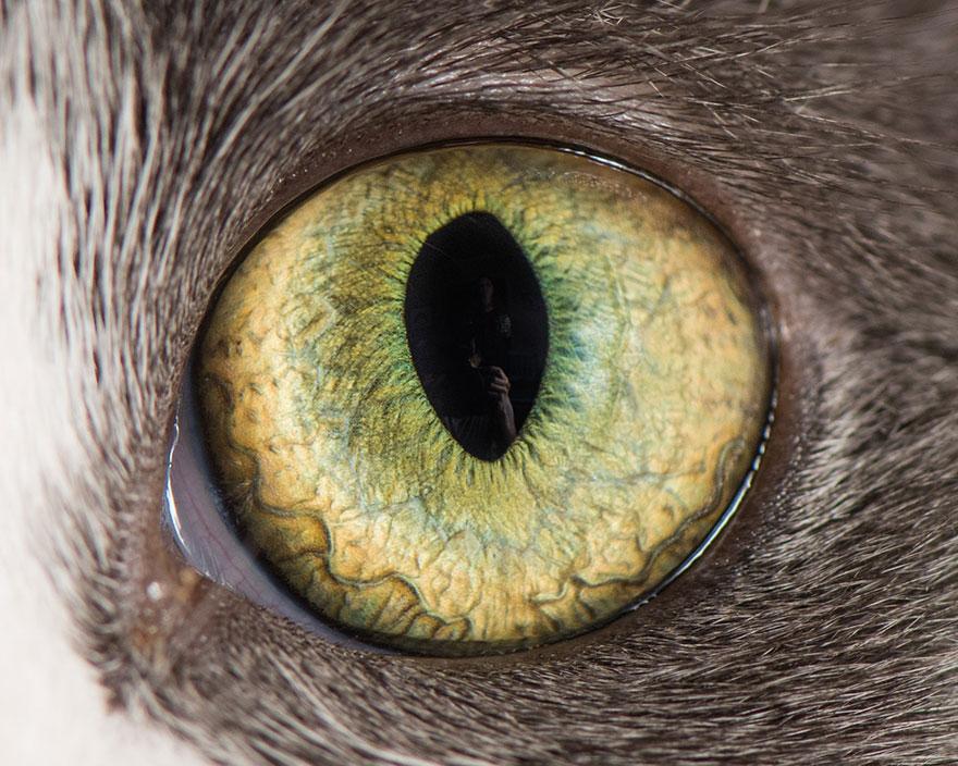 Глаза разных животных картинки