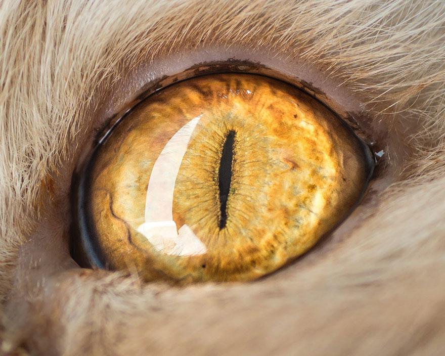 Фото хлоя тайная жизнь домашних животных этим