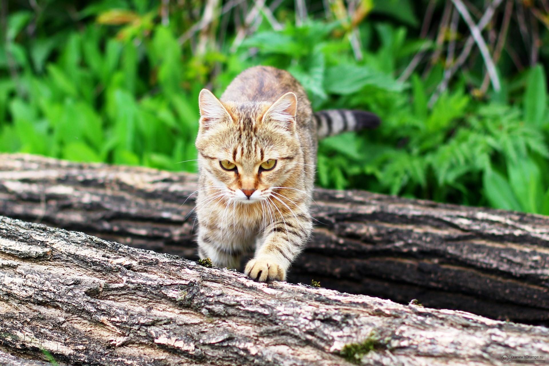 коты на охоте фото чего