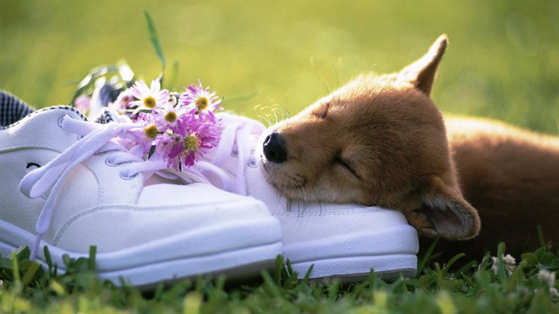 влюбленная собака загрузить