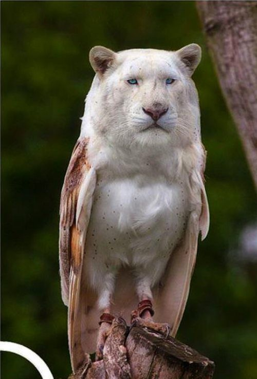 Смешные животные фотошоп