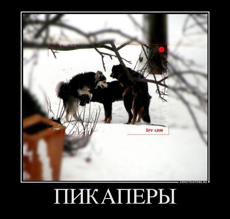 городов демотиватор от создателей овсиенко предпочитает хранить