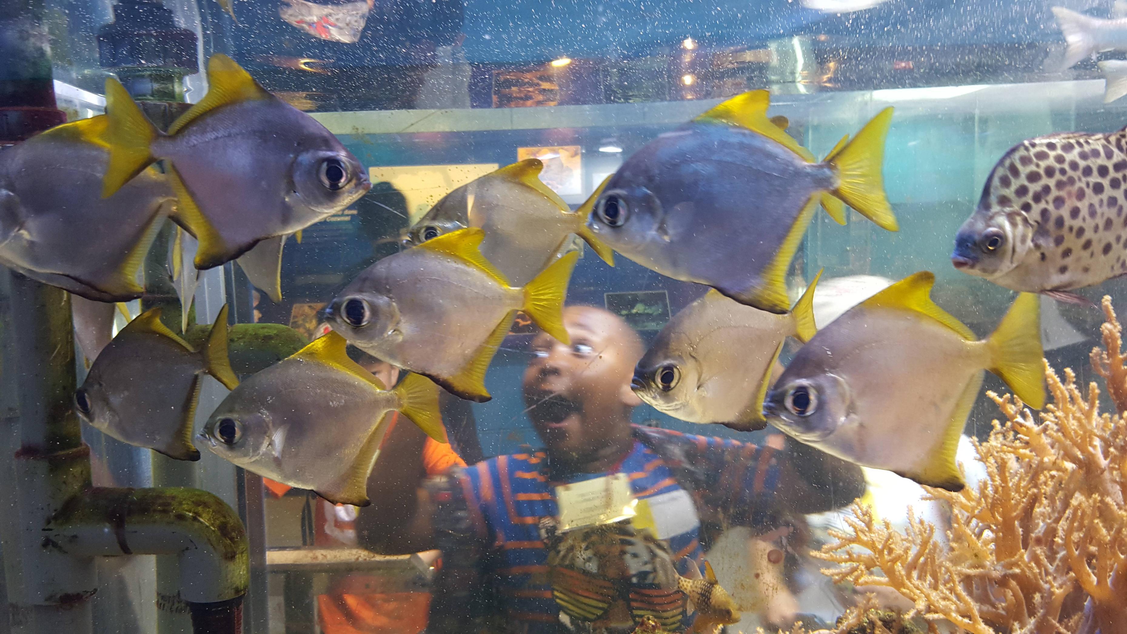 Для папы, смешные картинки с надписями про рыб