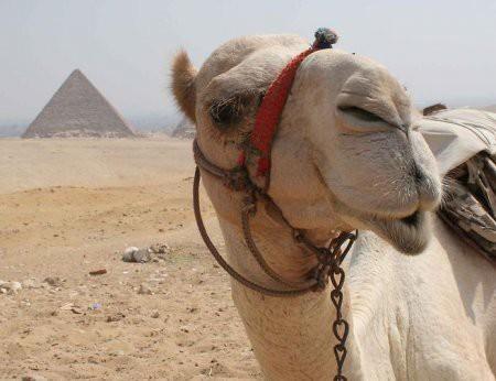 Где познакомиться с парнем геем в египте знакомства з девушкой киев тел и фото