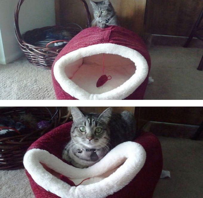 15. Да, человеку кота никогда не понять… животные, кошка, логика