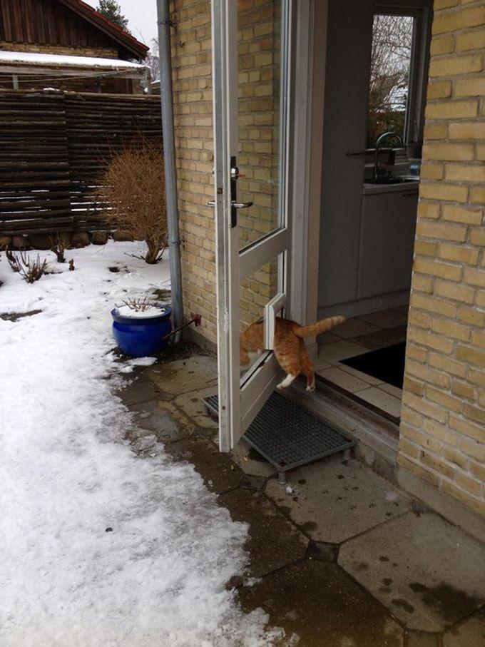 5. «У меня есть своя дверь. Это принципиально» животные, кошка, логика